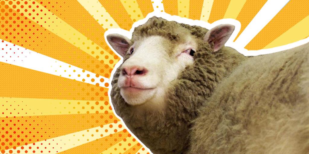 Questa immagine ha l'attributo alt vuoto; il nome del file è SHEEPopop-1024x512.jpg